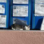 不動産広告の振りをする猫